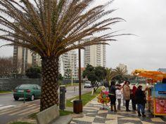 O Palhetas na Foz: Precipitações carnavalescas!