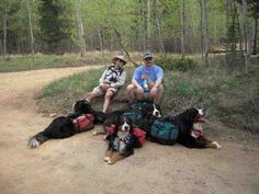 Backpacking with your Bernese Mountain Dog