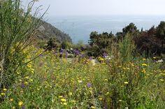 Il giardino del Resort La Francesca