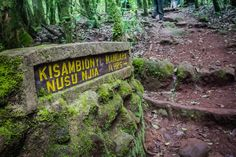 The hiking trail while Climbing Mount Kilimanjaro Tanzania. Click to read the full travel blog post.
