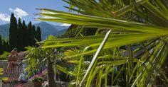 Schön, dass Sie da sind!    Herzlich willkommen im Dolce Vita Hotel Jagdhof – unserem 4-Sterne-Hotel im Vinschgau, auf der Sonnenseite der Alpen.  Sie planen einen Wanderurlaub in Südtirol? Ferien mit dem Mountainbike? Oder brauchen Sie nur eine kleine Auszeit, möchten sich mit Wellness und kulinarischen Köstlichkeiten verwöhnen lassen und neue Energie tanken?    Wie auch immer... Hier sind Sie richtig! Treten Sie ein, wir freuen uns auf Sie!