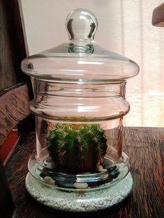 Terrariums, Jar, Home Decor, Terrarium, Homemade Home Decor, Terraria, Jars, Decoration Home, Glass
