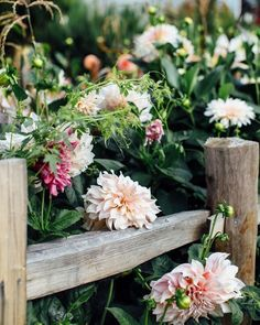 Landscape Gardeners Are Like Outside Decorators! With Their Diversity Of Spectacular Blooms In Summer Gardens, Dahlias Also Make Excellent Cut-Flower Displays. For Favorite Varieties, Growing Tips, And Easy Arrangements, Visit Photo: Jeska Hearne Home Design, Country Fences, Victoria Magazine, Room Of One's Own, Herb Pots, Spring Blooms, Flower Farm, Garden Gates, Cut Flowers