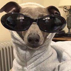 So much personally, such small doggo Cute Animal Memes, Animal Jokes, Cute Funny Animals, Funny Animal Pictures, Funny Dog Memes, Cute Memes, Funny Dogs, Cute Puppies, Cute Dogs