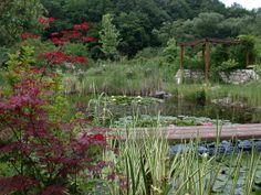The back garden in 2010