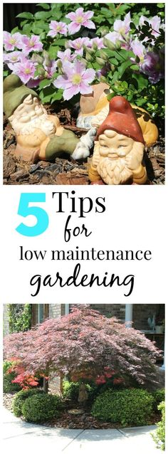 5 easy tips for low maintenance Plus my garden tour. Budget Gardening Tips Low Maintenance Landscaping, Low Maintenance Garden, Shade Garden, Garden Plants, Backyard Plants, Garden Gnomes, Organic Gardening, Gardening Tips, Gardening Services