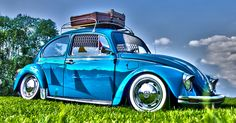 """500px / Photo """"The Blue Beetle"""" by Edwin Notmeyer"""