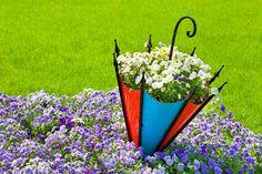 Terre/Nature - Pansy  - Pansies - Fleur - Umbrella - Pourpre Fond d'écran