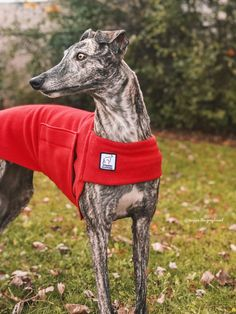 Voyagers K9 Apparel Red Tummy Warmer Maggie the Greyhound Dog