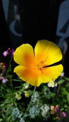 Unsere Sommerblumenmix erfreut uns mit wunderschönen Blüten