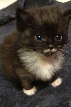 Kitten with bib and mustache. So cute!