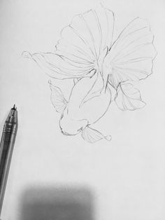 Fish Drawings, Animal Drawings, Art Drawings, Pencil Tattoo, Monochromatic Art, Learn Art, Fish Art, Crayon, Goldfish