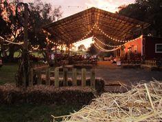 Coon Hollow Farm, Miconopy, FL near Gainesville
