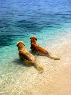 Sigh... Haven't been to the beach forever Wish i could join them
