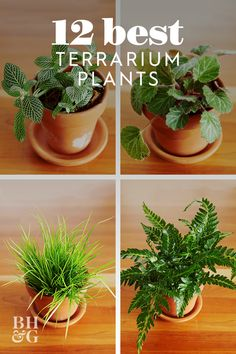 No matter what time of year it is, use our favorite selection of terrarium plants to help create your own thriving mini container garden. Best Terrarium Plants, Water Terrarium, Build A Terrarium, How To Make Terrariums, Garden Terrarium, Succulent Terrarium, Bottle Terrarium, Mini Terrarium, Making A Terrarium