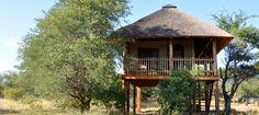 nThambo Tree Camp in the Klaserie Private Nature Reserve in Kruger Perfect Place, The Good Place, Tree Camping, Safari Holidays, Nature Reserve, Lodges, South Africa, Gazebo, Dream Hotel