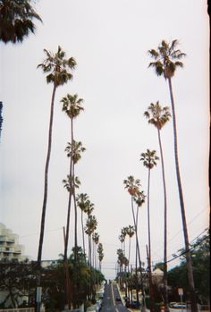 Underneath the palm trees.