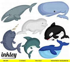 Whale Clipart Whale Clip Art Whale Png Dolphin Clipart