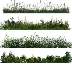 50 Photoshop Brushes of Dynamic Vegetation 2