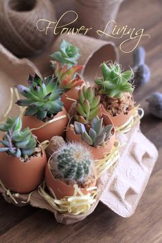 succulent plan--this would make a great gift!