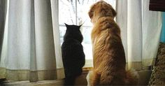 Dog Completely Devastated By The Loss Of His Best Friend Meets An Unexpected Companion!