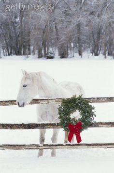 SEASONAL – CHRISTMAS – the magic of the holiday makes another appearance in the form of a white horse and a perfect christmas wreath.