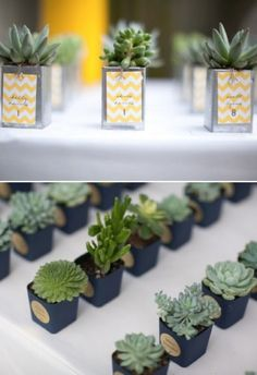 Unique Wedding favors - succulents to grow with our marriage. :)
