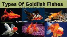 Go Fish 30 Spanish Fish Names Every Traveler Oughta Know Animals Name In English, Goldfish Types, Fish Chart, Oscar Fish, Homer Alaska, Animal Worksheets, Fish Stock, Pet Fish, Types Of Fish