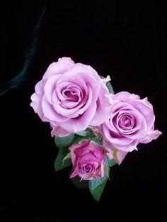 Peterkort Roses