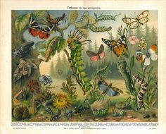 Insects Antique Print Arthropods Chromolithograph  Butterflies Moths Caterpillars. 22.00, via Etsy.