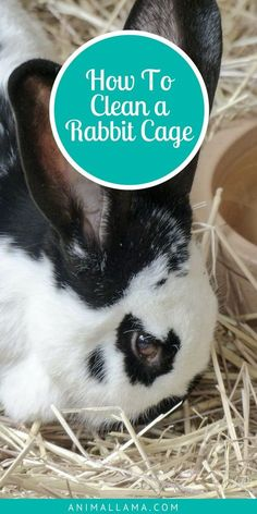 Keeping our rabbits' cage clean and smelling fresh is vital for our pets' happiness and well-being. Learn how to clean a rabbit cage and which cleaning activities you should be doing on a daily and weekly basis. #rabbits #pets #rabbitcare #rabbitcage #rabbit #petcare