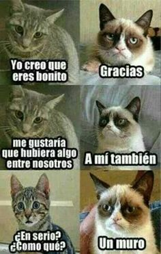 memes en espanol / memes ` memes hilarious can't stop laughing ` memes hilarious ` memes funny ` memes to send to the group chat ` memes divertidos ` memes about relationships ` memes en espanol Funny Grumpy Cat Memes, Funny Animal Jokes, Crazy Funny Memes, Stupid Memes, Funny Relatable Memes, Funny Cats, Funny Animals, Grumpy Kitty, Cool Memes