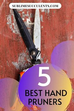 Sharing with you best hand pruners. When shopping for gardening tools, it can be easy to get overwhelmed by the number of choices. We've done the hard work of researching which hand pruners are best and gathered the results. This way, you can spend less time shopping and more time working on your succulent garden. Check this pin! #handpruners #gardeningtools #gardening Rainbow Colors, Vibrant Colors, Succulent Care, Time Shop, Gardening Tools, The More You Know, Types Of Plants, Cacti And Succulents, Hard Work