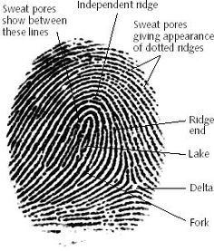 Forensic Science at Harry S. Truman High School