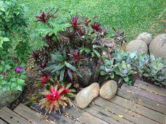 Tropical garden.