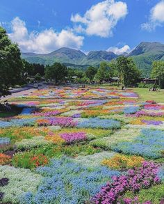 "stephie ⇆ acnh ga📌 on Twitter: ""kuju flower park in japan is a dream… "" Nature Aesthetic, Flower Aesthetic, Summer Aesthetic, Kurokawa Onsen, Beautiful World, Beautiful Places, Pretty Pictures, Aesthetic Pictures, Mother Nature"