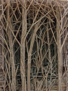 The Cardboard Forest – Beyond the Window Box