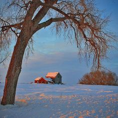 "Evening of Another Day | Flickr - Patrick Esterly - ""It was a cold (-20 F) evening at that. I liked how the old cottonwood tree framed this abandoned house located a few miles from our place on the North Dakota prairie."""