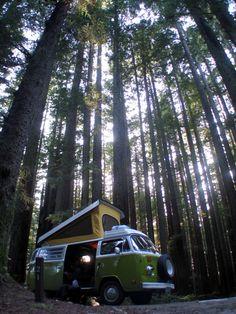 VW Westfalia in the woods...