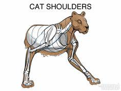 PARLEQUIN — anatoref: Intro to Animal Anatomy by Marshall...