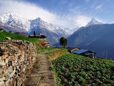 On the trail to the Annapurna Base Camp