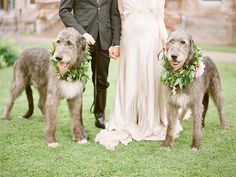 10 Unbearably Adorable Dogs That Steal The Show At Their Parents Wedding - Three Million Dogs Dog Wedding, Wedding Blog, Wedding Day, Dream Wedding, Lesbian Wedding, Wedding Dreams, Wedding Ceremony, Ireland Wedding, Perfect Photo