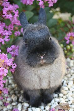 Abby - The Adorable Face - Rabbit