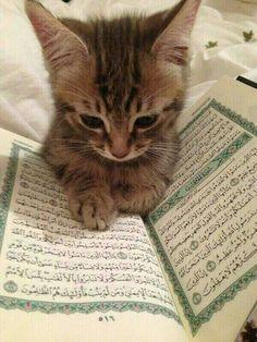 Cat reading Qur'an awww