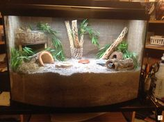 (Pb) CrabbyPatti & Crabitat ♥ on Pinterest   @djohnisee ~ PIC: Nice Crabitat! ~~~ HINT: Rather than throwing away (landfill) ~ Please re-purpose the substrate (sand, etc), compost it or use to enrich your container/garden soil. ~ for more great PINs w/good links visit @djohnisee ~ have fun!