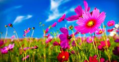 Are there any health benefits to eating flowers? You may be surprised: http://blog.lifeextension.com/2015/07/the-power-of-medicinal-flowers.html #flowers #nutrition