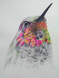 Anna's hummingbird – Chris'Art – Tattoo World Hummingbird Drawing, Hummingbird Pictures, Hummingbird Tattoo Black, Watercolor Bird, Watercolor Paintings, Art Paintings, Watercolor Hummingbird, Art Colibri, Mutterschaft Tattoos