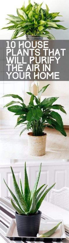 I love having plants around the house! Did you know that Air Purifying Plants help to remove toxins from the air -- and they help to make your home SMELL better overall! Here are 10 Houseplants to Purify Your Home and add to your home decor!