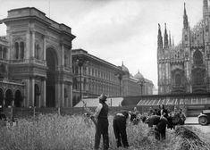 Raccolta del grano in piazza Duomo a Milano negli anni Venti