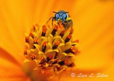 Bee by Lisa Silva on 500px